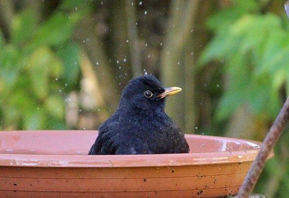 Stunde der Gartenvögel: Mitmachen ganz GROSS